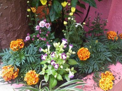 I planted flowers even on small corners like this