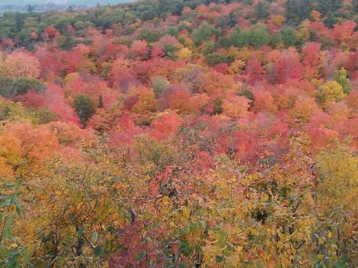 Gatineau Hills In Autumn (Photo Credit Dorian)