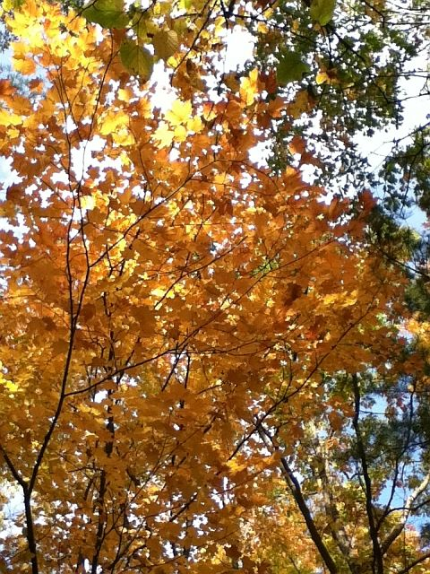 Orange leaves in fall on a branch