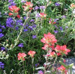 Wildflowers in the desert.
