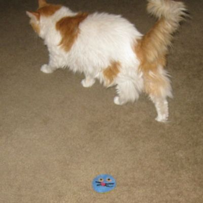 Scarlett and the New Cat Toy -- Is It Trustworthy?