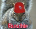 rally squirrel