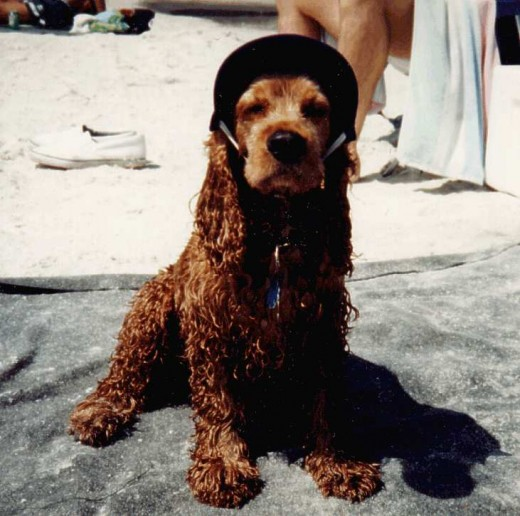 He is also have his favorite ballcap. He wasn't very happy here because we took him to the beach. I guess he didn't like sea water or sand.