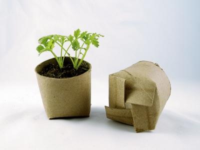 Toilet Roll Pots