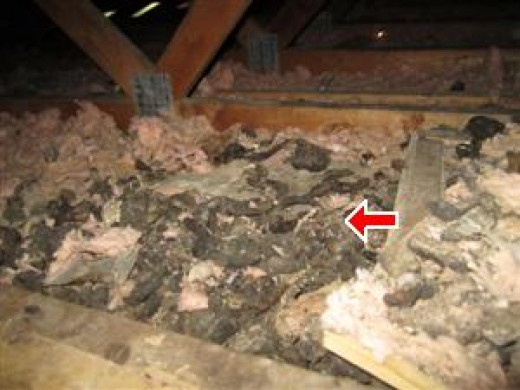 Animal feces and other residual material can be expensive to remove from your attic.