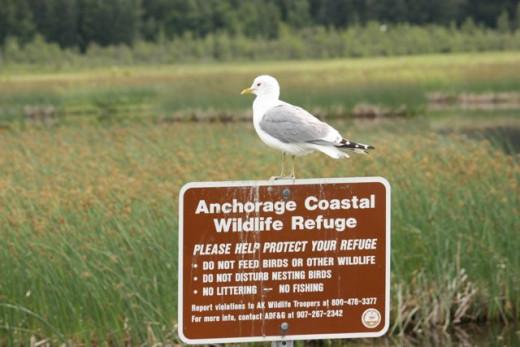 Anchorage Coastal