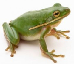 How the Frog made the Flood