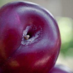 A perfect plum