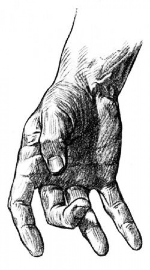 Illustration of human hand.