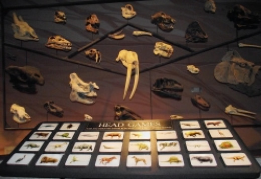 Guess the animal skull game.