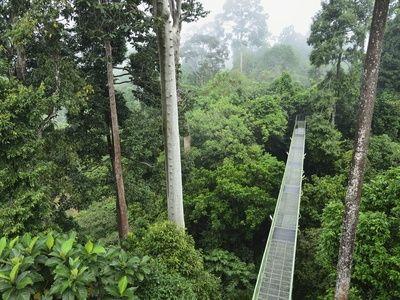 Sepilok Rain Forest