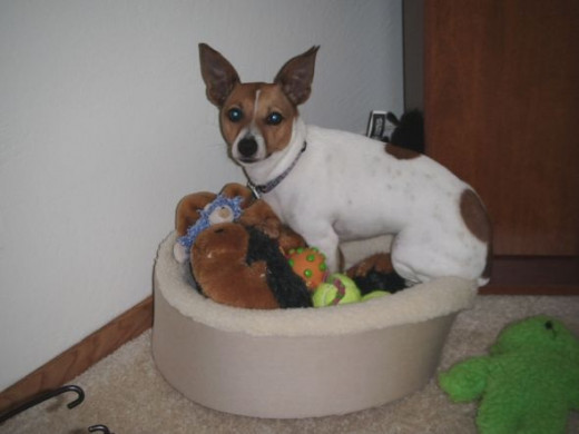 Misha sitting in dog bed with toys