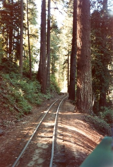 Riding along the tracks into the grove