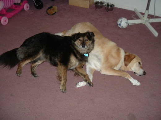 Sierra with her buddy, Tyson.
