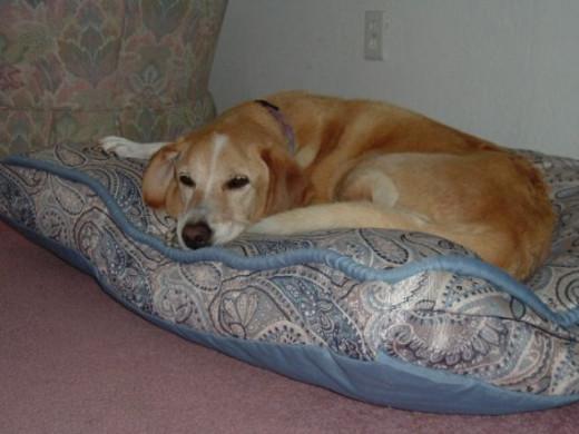 Enjoying her new, comfortable bed