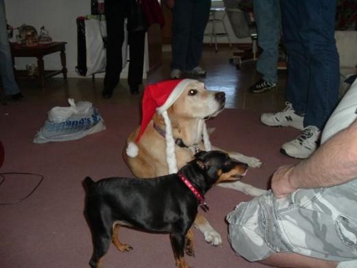 Christmas morning with Buddy