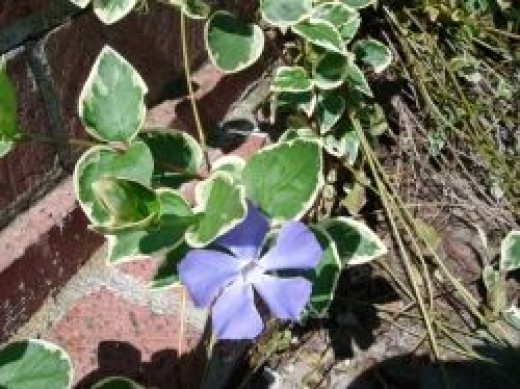 Small flowers growing in bricks