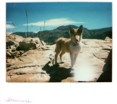 My dog, Shaunee, on a camping trip in 1978.  Taken on the Kodak Handle camera.