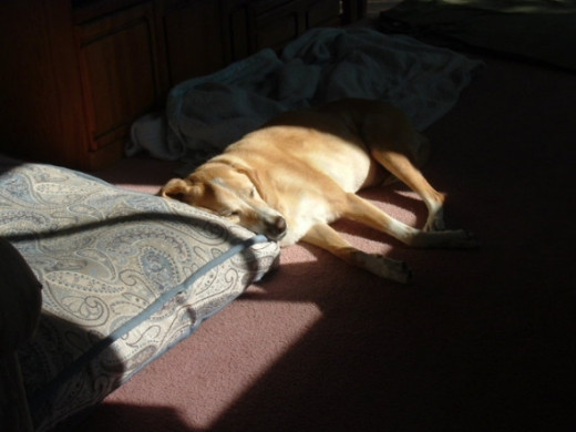 My sweet Sierra in her favorite sun spot.