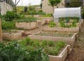 Raised Bed Vegetable Growing