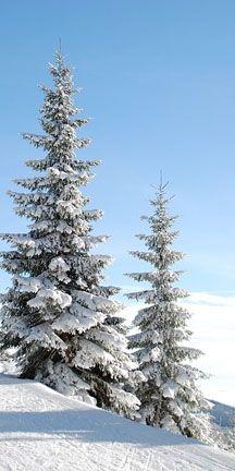 trees-in-winter