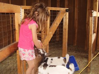 My daughter plays with the baby goats. The are very friendly because they get a lot of attention.