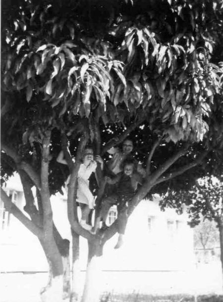 Up a Mango Tree
