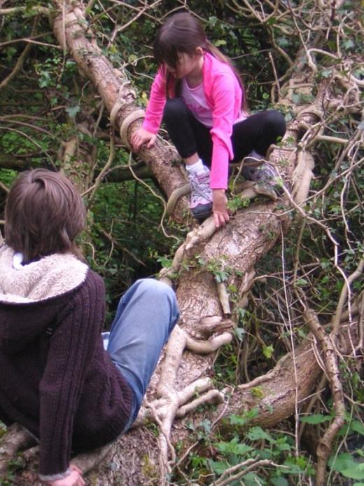 Negotiating the fallen 'ivy tree'.