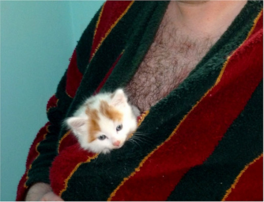 Hairy chested man with cute kitten