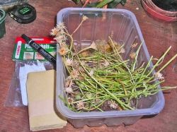 seed packets in plastic containter