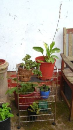 Improvised plant shelves using old vegetable rack