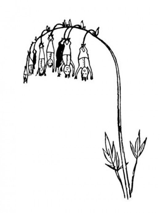 "I suspect that Edward Lear's drawing of ""Manypeeplia upsidedownia"" was based on this plant."