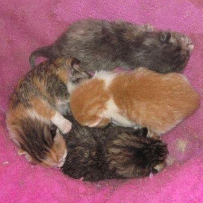 Lovebug's Kittens