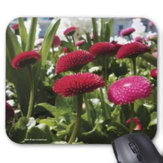 You can buy this picture of Bellis on a Mousemat on Zazzle
