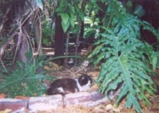 Another Hemingway Cat