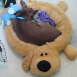 Best Dog Bed: Tito Loves His Loofa Dog Bed