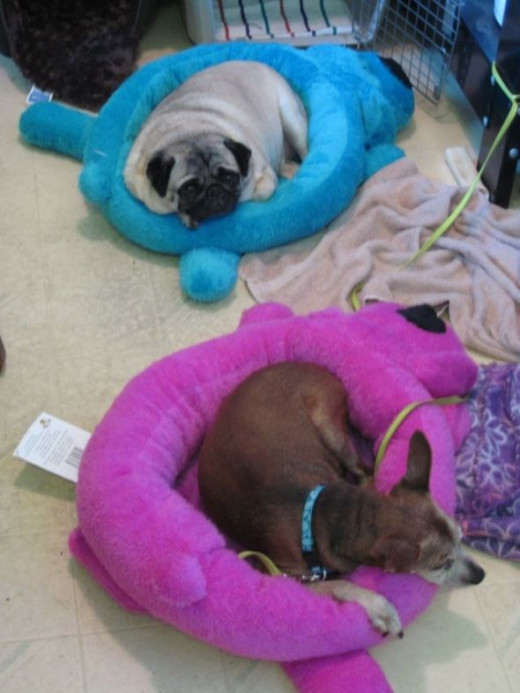 Loofa Dog Beds in Blue and Magenta