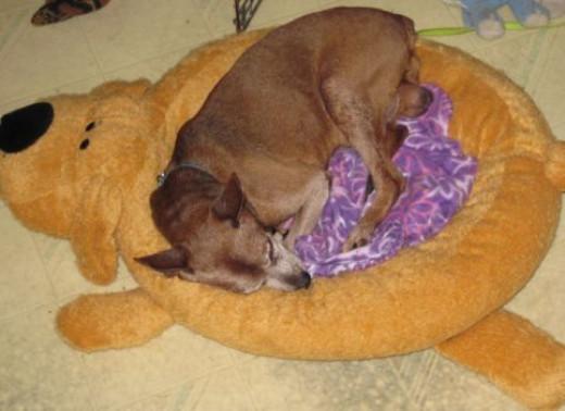 Tito loving his Loofa Dog Bed
