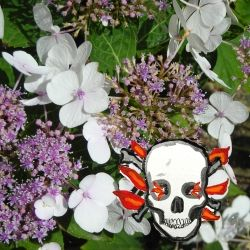 Hydrangea and deaths head