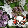Poisonous Garden Plants: Iris, Azalea, Hydrangea