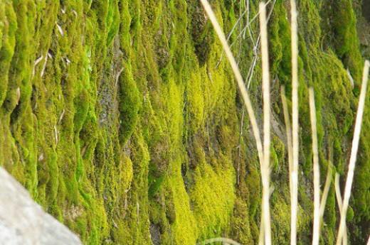 Neat green stuff growing on the wet side.