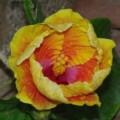Tucson Botanical Gardens - a Tour