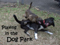 How to Play Safely in the Dog Park