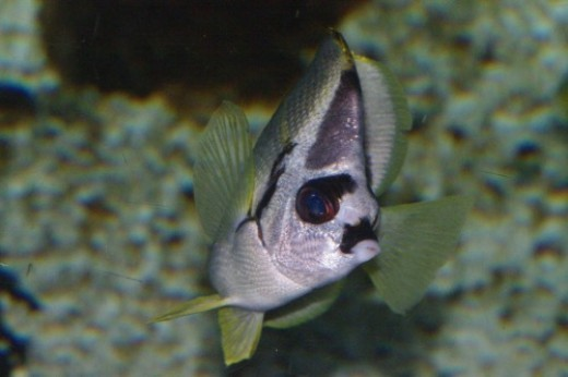 Fish like to turn suddenly without warning when you snap the picture. This is what happens when they do.