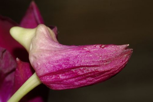 When you take pictures of flowers, don't overlook buds!
