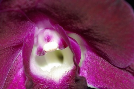 Another orchid.