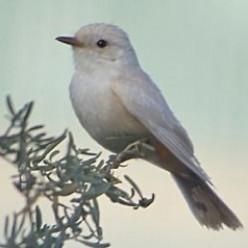 Become a Birdwatcher