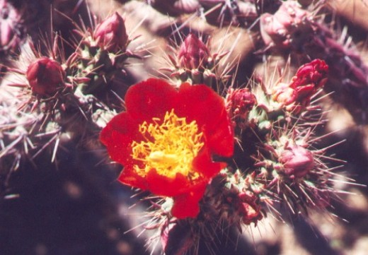 Cholla. Look, but don't touch!
