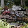 Gardening For Wildlife: How To Create A Backyard Wildlife Habitat Garden