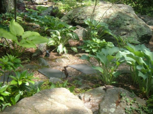 Gardening for wildlife how to create a certified backyard for Creating a rock garden